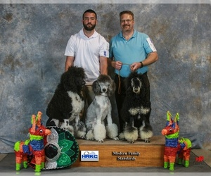 Havanese Dog Breeder in EFFINGHAM,  USA