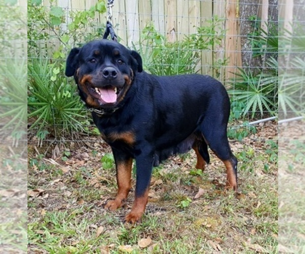 Medium Photo #1  Breeder Profile in LAKELAND, FL, USA