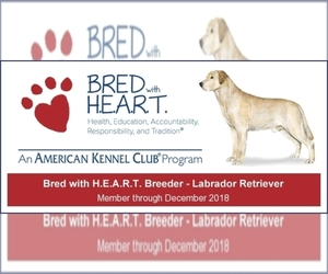 Labrador Retriever Dog Breeder in BROWNSTOWN,  USA