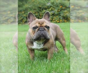 French Bulldog Breeder in ONTARIO, CA