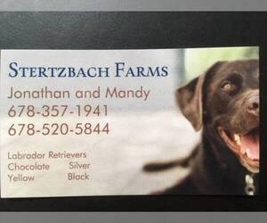 Main photo of Labrador Retriever Dog Breeder near BETWEEN, GA, USA