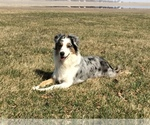 Small Photo #3  Breeder Profile in ROBERTS, IL, USA