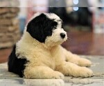 Small Photo #6  Breeder Profile in STANLEY, VA, USA