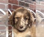 Small Photo #8  Breeder Profile in ODIN, IL, USA