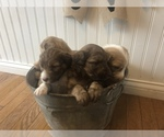Small Photo #10  Breeder Profile in ODIN, IL, USA