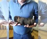 Small #9 Breeder Profile image