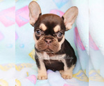Small Photo #1  Breeder Profile in BELLE CENTER, MO, USA