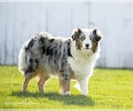 Small Photo #11  Breeder Profile in ROBERTS, IL, USA