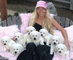 Small Photo #1  Breeder Profile in GLENDALE, CA, USA