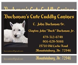 West Highland White Terrier Dog Breeder near MOUNTAINBURG, AR, USA