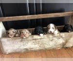 Small Photo #3  Breeder Profile in ODIN, IL, USA