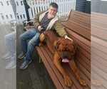 Dogue de Bordeaux Breeder in HURLOCK, MD, USA