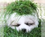 Small #30 Breeder Profile image