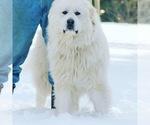Small #56 Breeder Profile image