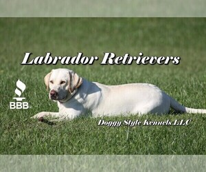 Labrador Retriever Dog Breeder near BARDSTOWN, KY, USA