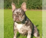 Small Photo #1  Breeder Profile in TOPEKA, KS, USA