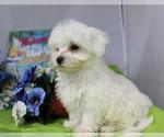 Small #10 Breeder Profile image
