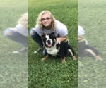 English Bulldogge Breeder in ALBRIGHT, WV, USA