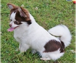 Small Photo #11  Breeder Profile in BELLE CENTER, MO, USA