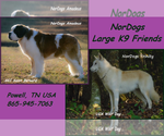 Wolf Hybrid Breeder in POWELL, TN, USA