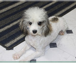Small #91 Breeder Profile image