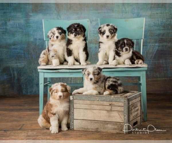 Medium Photo #19  Breeder Profile in ROBERTS, IL, USA