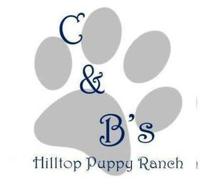 Boxer Dog Breeder in PLATO,  USA