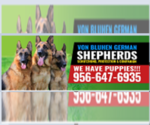 German Shepherd Dog Breeder in WESLACO, TX