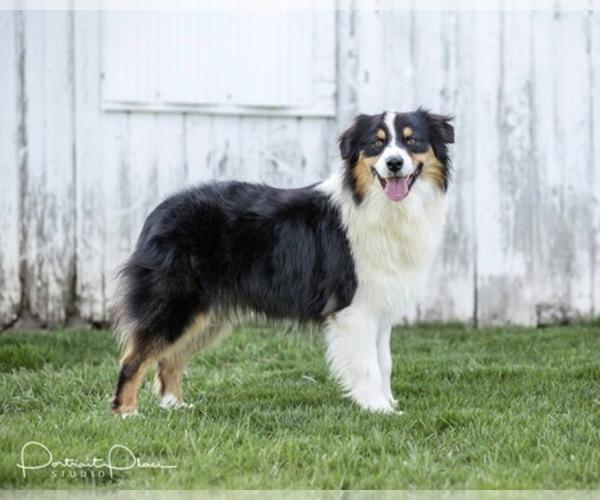 Medium Photo #13  Breeder Profile in ROBERTS, IL, USA