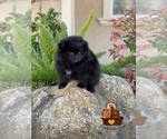 Small Photo #2  Breeder Profile in STKN, CA, USA