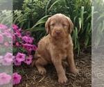 Small #16 Breeder Profile image