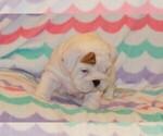 Small #75 Breeder Profile image