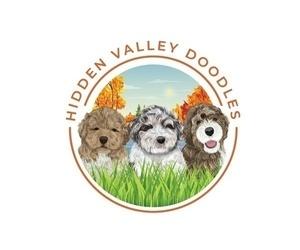 Labradoodle Dog Breeder in MILLVILLE,  USA