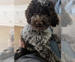 Small Photo #6  Breeder Profile in AGUA DULCE, CA, USA