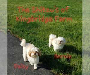 Shih Tzu Dog Breeder in LOWELL,  USA