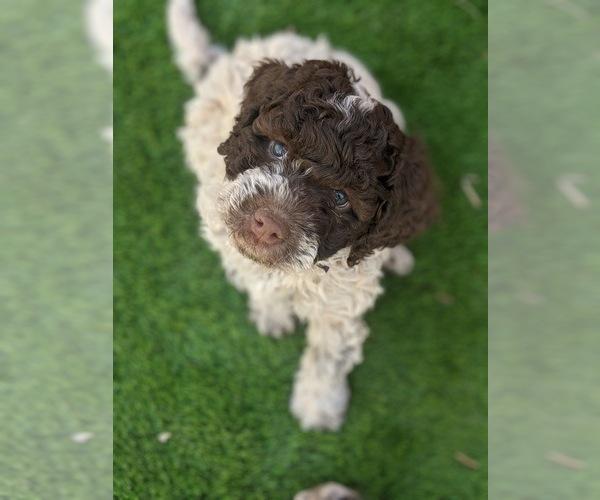 Medium Photo #17  Breeder Profile in AGUA DULCE, CA, USA