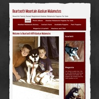 Beartooth Mt Alaskan Malamutes