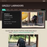 Quality AKC Silver Labradors