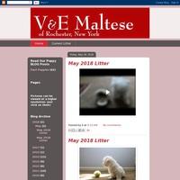 VE Maltese