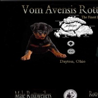 Vom Avensis Rottweiler