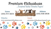 Premium Chihuahua Puppies for Sale