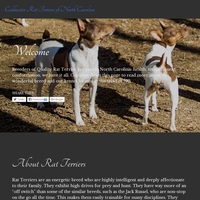 Coldwater Rat Terriers